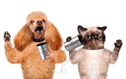Katze mit einem Hund am Telefon mit einer Dose lizenzfreie stockbilder