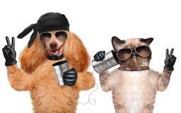 Katze mit einem Hund am Telefon mit einer Dose lizenzfreie stockfotografie