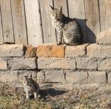 Katze mit einem Kätzchen stockfoto