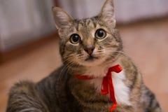 Katze mit einem roten Band Stockbild