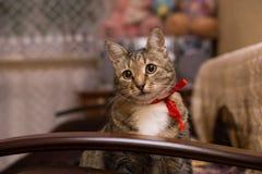 Katze mit einem roten Band Stockfotos