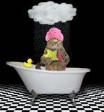 Katze mit einem Stern nimmt ein Bad stockfoto