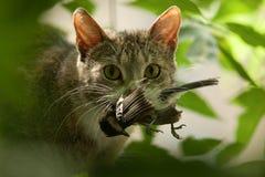 Katze mit einem Vogel in Zähne. Lizenzfreie Stockbilder