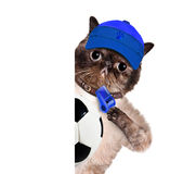Katze mit einem weißen Fußball. Stockfotografie