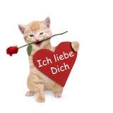 Katze mit einer roten Rose und einem roten Herzen Stockfotografie