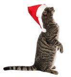 Katze mit einer roten Sankt-Kappe Lizenzfreie Stockfotografie