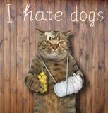 Katze mit einer verbundenen Tatze nahe einem Zaun stockfoto