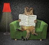 Katze mit einer Zeitung auf einer grünen Couch lizenzfreie stockfotos