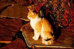 Katze mit Fallfarben Lizenzfreies Stockfoto