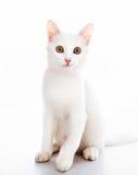 Katze mit Farbband lizenzfreie stockfotos