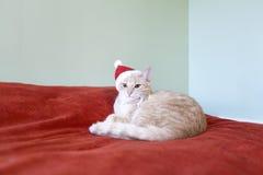 Katze mit Feiertags-Hintergrund Stockfotografie