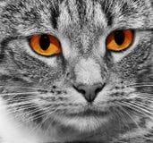 Katze mit furchtsamen roten glühenden Augen Stockfoto