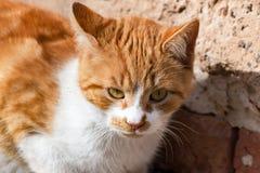 Katze mit gelbem Pelz Stockfoto