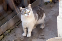 Katze mit gelben Augen Stockfoto