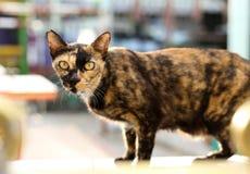 Katze mit gelben Augen auf der Wand Stockfotografie