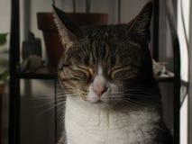 Katze mit geschlossenen Augen lizenzfreie stockfotos
