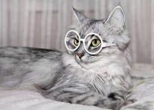 Katze mit Gläsern lizenzfreie stockfotografie