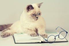 Katze mit Gläsern und Buch Lizenzfreie Stockbilder