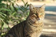 Katze mit grünen Augen stockbild