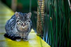 Katze mit grünen Augen Lizenzfreies Stockfoto