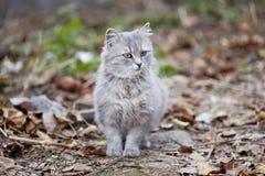 Katze mit grünen Augen Lizenzfreie Stockbilder