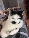Katze mit gutem Swag lizenzfreie stockfotografie
