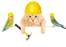 Katze mit Hammer und Vögeln. Stockfotos