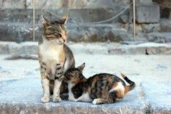 Katze mit ihrem Baby Stockfotografie