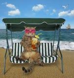 Katze mit kaltem Tee sitzt auf einer Schwingenbank stockfoto
