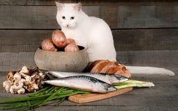 Katze mit Kartoffeln und Fischen Stockbild