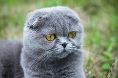 Katze mit Kugel Stockfotos