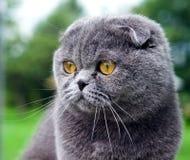Katze mit Kugel Stockfoto