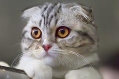 Katze mit Kugel stockbild