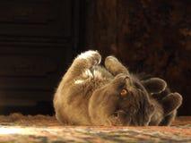 Katze mit Kugel Lizenzfreies Stockbild