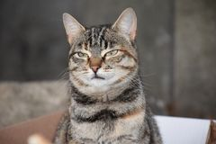 Katze mit lustigem Ausdruck stockfotografie