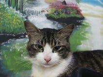 Katze mit Malerei Lizenzfreies Stockfoto