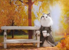 Katze mit Morgenkaffee geht in Herbstpark stockfotografie