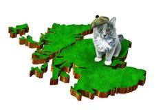 Katze mit nationalem Sonderzeichen von Schottland Stockfotografie