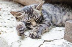 Katze mit orange Augen Lizenzfreie Stockfotos