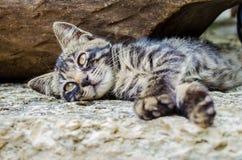 Katze mit orange Augen Stockbild