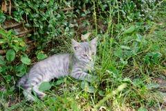Katze mit Pelz der Weißgetigerten Katze legt und steht im Garten auf Gras still Stockfotos