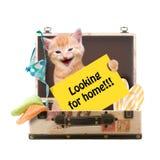 Katze mit Plakat Stockbild