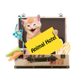 Katze mit Plakat Tier-Hotel Stockbild
