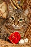 Katze mit Rot stieg Lizenzfreie Stockfotografie