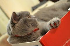 Katze mit rote Nägel lizenzfreie stockbilder