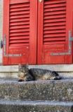Katze mit roter Tür Stockbilder