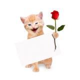 Katze mit Rotrose und Fahne lokalisiert Lizenzfreie Stockbilder