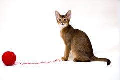 Katze mit Schlaufe