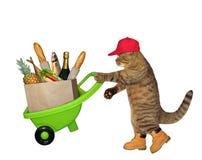 Katze mit Schubkarre von Nahrung 2 lizenzfreie stockfotografie