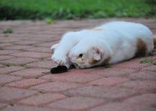 Katze mit seiner gerechten catched Maus stockfoto